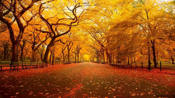 central-park-new-york-autumn-hd-wallpapers-central-park-new-york-wallpaper-
